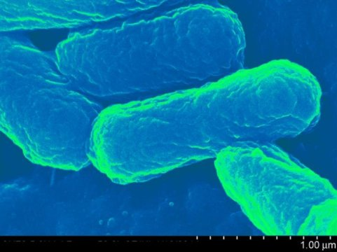 E. coli-based transport capsule enables next-gen vaccines