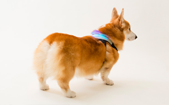 Wearables for your four legged friend