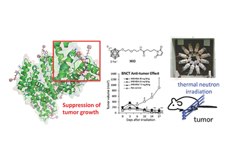 Boron carrier for targeted tumour therapy