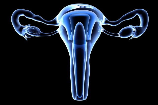 Fallopian tubes grown in lab for the first time