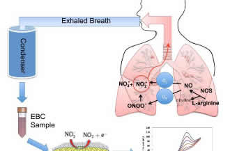 Graphene-based sensor could improve diagnosis of asthma