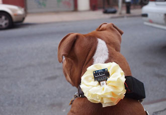 How to make your own GPS dog collar