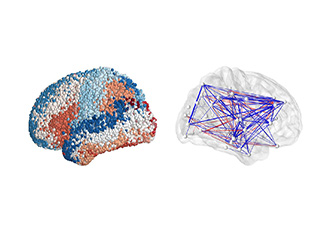 First whole-brain map shows key to forming memories