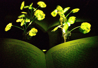 Glowing plants could be the electrical lighting of the future