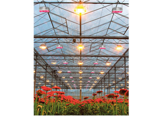 Horticultural LED light cuts energy by 40%