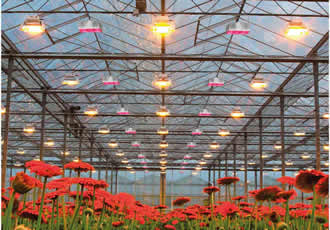Horticultural LED lights spur on crop growth