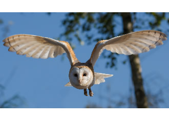 Owls' wings inspire quieter wind turbines