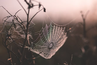 Nanomaterials help spiders spin the toughest silk