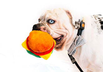 Dog wearable burns off the equivalent of 1 million Big Macs