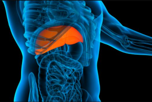 Regulator improves liver regeneration