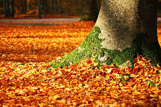 Decomposing leaves are a source of greenhouse gases