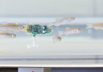 Mini robot gets a schooling when swimming with fish