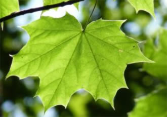 Photosynthesis could help damaged hearts