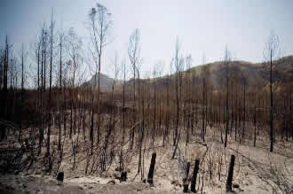 NASA-supported tool accelerates wildfire recovery