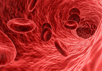 Gold 'nanoprobes' used to track blood flow in tiny vessels