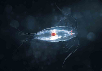 Deep sea creatures could aid development of cancer therapies