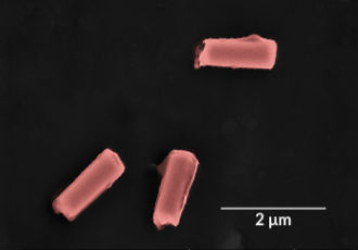 Ultrasound-powered nanorobots clear bacteria and toxins from blood