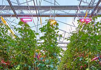 Improving harvest efficiency through LED lighting