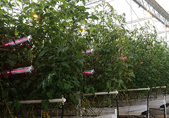 Complement existing top lighting in greenhouses
