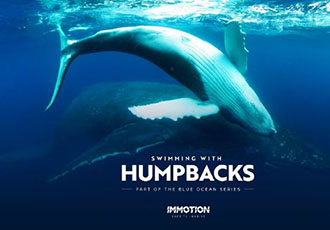 Swimming with humpback whales VR experience
